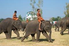 El rodeo anual del elefante en Surin, Tailandia Fotografía de archivo
