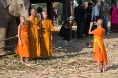 El rodeo anual del elefante en Surin, Tailandia Imagenes de archivo