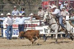 El rodeo ata abajo Roping Imagen de archivo