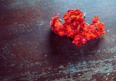 El rojo florece geranios Foto de archivo libre de regalías