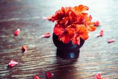 El rojo florece geranios en una tabla de madera Imagen de archivo
