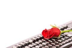 El rojo hermoso se levantó en el teclado negro Foto de archivo