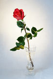 El rojo hermoso se levantó en un florero Imagen de archivo