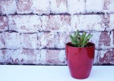 El rojo inclinó el succulent en un florero rojo contra fondo del ladrillo Foto de archivo