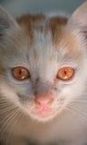 El rojo observa el gato Fotos de archivo