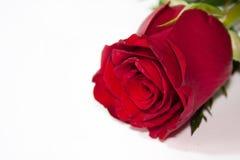 El rojo romántico se levantó Imágenes de archivo libres de regalías