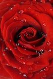 El rojo romántico se levantó Fotografía de archivo libre de regalías
