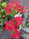 El rojo sale de las plantas Fotos de archivo