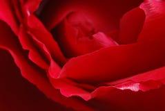 El rojo se levantó 3 Imagenes de archivo