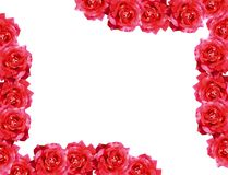 El rojo se levantó Imagen de archivo
