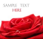 El rojo se levantó con gota del agua Fotos de archivo libres de regalías