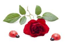 El rojo se levantó con las hojas y el ladybug Foto de archivo libre de regalías