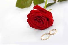 El rojo se levantó con los anillos Fotografía de archivo