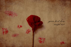 El rojo se levantó con varios besos del lápiz labial Fotografía de archivo libre de regalías