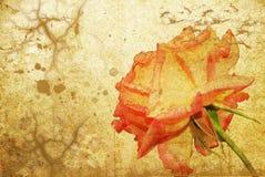 El rojo se levantó en el papel viejo Foto de archivo libre de regalías