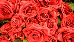El rojo se levantó para el amor Fotografía de archivo libre de regalías