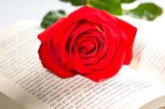 El rojo se levantó sobre un libro fotografía de archivo