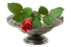 El rojo se levantó en el tazón de fuente de plata antiguo aislado Imagen de archivo libre de regalías