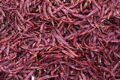 El rojo secó los chiles refrescados hacia fuera ya Fotografía de archivo libre de regalías