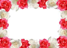 El rojo y el blanco se levantaron Imagen de archivo libre de regalías