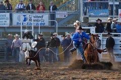 El Roping del buey - hermanas, favorable rodeo 2011 de Oregon PRCA Imagenes de archivo