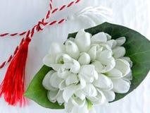 el 1ros de los snowdrops blancos y rojos de la tradición de marzo del cordón y del ghiocel florecen fotografía de archivo libre de regalías