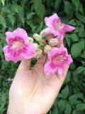 El rosa de la flor Imágenes de archivo libres de regalías
