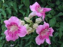 El rosa de la flor Imagen de archivo