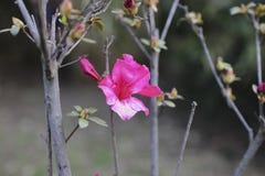 EL ROSA ROSA DE LA NATURALEZA DE LA FLOR PONE VERDE VERDE CIELO fotografía de archivo libre de regalías