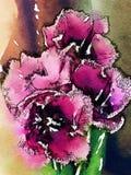 El rosa florece fondos abstractos del chapoteo stock de ilustración