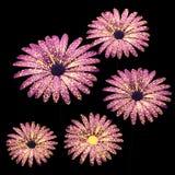 El rosa florece la composición en el ejemplo negro 3D Imagen de archivo