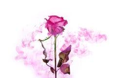 El rosa interior de la sangre de la pasión del agua del acrílico blanco del fondo de la rosa del rojo del extracto del estilo del foto de archivo libre de regalías