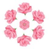 El rosa subió adorno decorativo de la mandala ilustración del vector