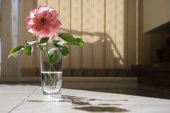 El rosa subió en una taza por la mañana fotografía de archivo libre de regalías