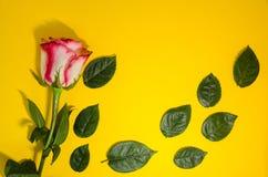 El rosa subi? con las hojas verdes que ca?an fotos de archivo
