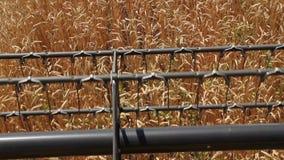 El rotor de la máquina segadora corta los oídos del trigo 3 metrajes