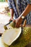 El ` s de los hombres da la fruta del Durian del corte Fotografía de archivo