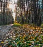 El ` s del sol irradia la fractura a través de los árboles Fotografía de archivo libre de regalías