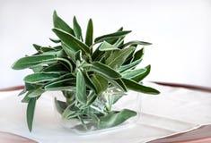 El sabio - Salvia - se va en un pote de cristal en el fondo blanco Utilizado como cocinar el ingrediente y propósitos médicos fotos de archivo libres de regalías