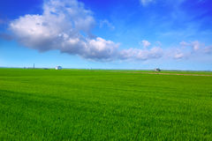 El Saler in Valencia rice fields green meadow Royalty Free Stock Photography