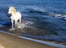 El salpicar del caballo blanco Imagen de archivo