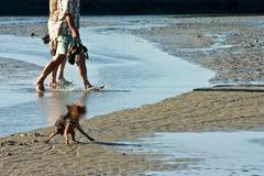 El salpicar del pequeño perro Foto de archivo