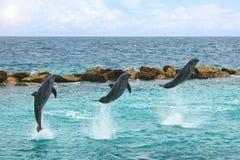El saltar de los delfínes del agua Foto de archivo libre de regalías