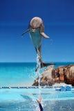 El saltar del delfín del agua Imagen de archivo