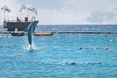 El saltar del delfín del mar cerca de la gente Buceando en el Mar Rojo, filón del delfín, Israel fotos de archivo