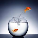 El saltar del Goldfish del agua Fotografía de archivo