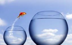 El saltar del Goldfish del agua imagen de archivo libre de regalías