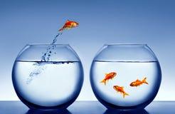 El saltar del Goldfish del agua Fotos de archivo