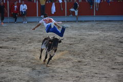 El salto de Bull Foto de archivo libre de regalías
