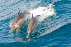 El salto de los delfínes Foto de archivo libre de regalías
